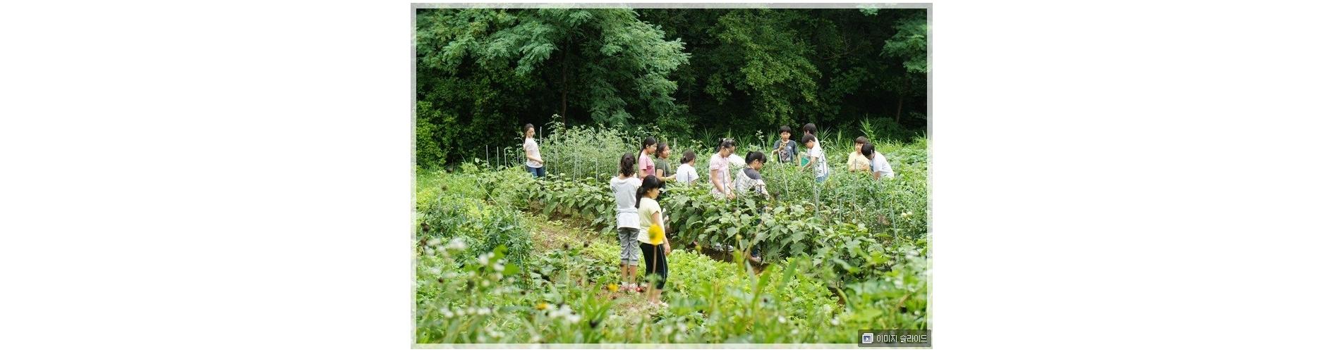 2013.7.17 푸른숲 종강